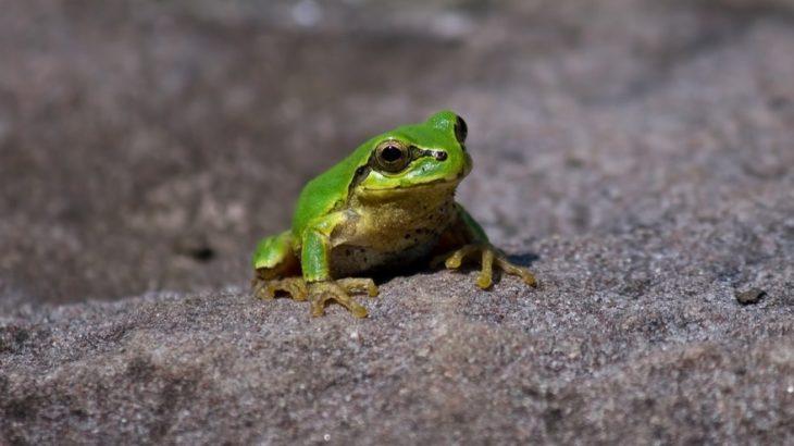 """""""井の中の蛙""""……に想う。"""